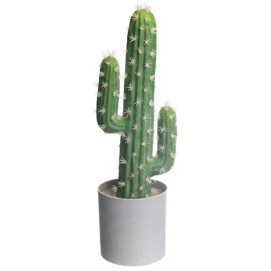 Shop For The Pre Made Small Peruvian Cactus Potted Plant By Ashland