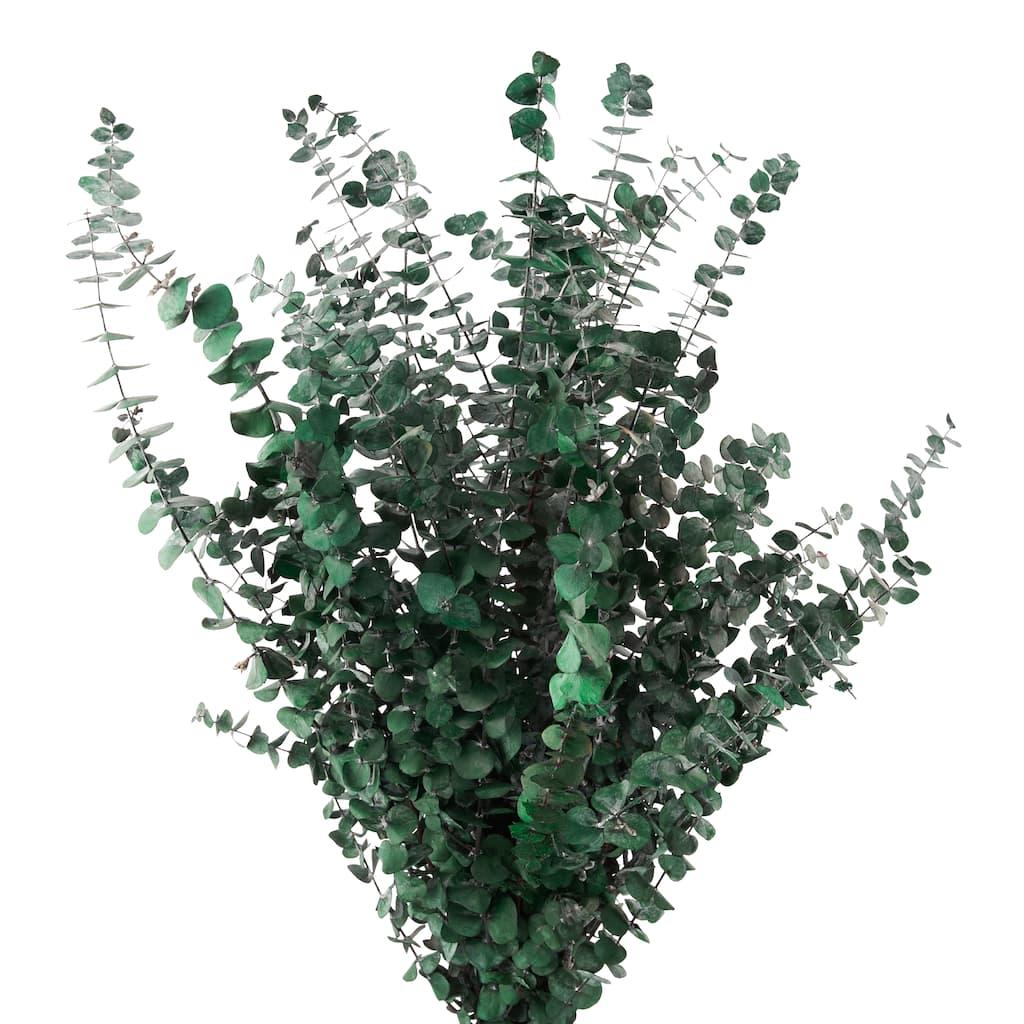 ideas for flower vase fillers with natural green flower.htm ashland   eucalyptus bunch  16 oz  ashland   eucalyptus bunch  16 oz