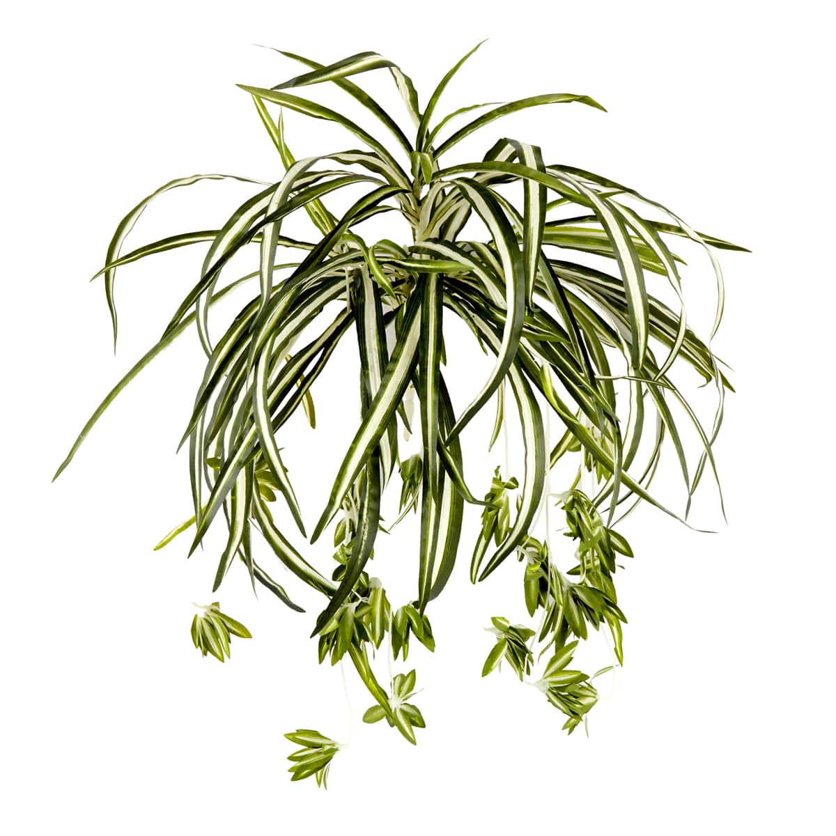 Ashland Classic Greenery Collection Variegated Spider Bush