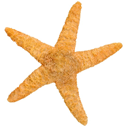 Sugar Starfish By Ashland