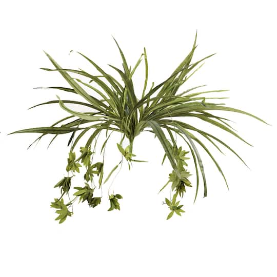 Ashland® Clic Greenery Collection Green Spider Plant Bush on spider plant care tips, spider plant light, spider eating food, tall spider plant, spider plant on a stick, spider infestation in home, spider plants outside, spider plant poisonous, spider plant varieties, spider plant roots, houseplants plant, rare spider plant, spider grass plant, spider plant care indoor, snake plant, spider plant toxic to dogs, spider flowering plant, spider plant in the wild, aloe vera plant,